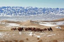 بالصور| 10 صحارى مذهلة في العالم تدعوك لاستكشاف المناظر الطبيعية ...