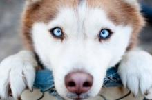 معلومات مذهلة: كيف ترانا الكلاب.. وكيف ترى الطعام والعالم من ...