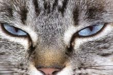 كيف تموت القطط؟