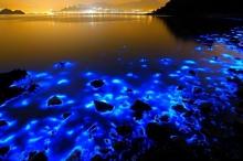 """ظاهرة """"الدموع الزرقاء"""" أمام سواحل تايوان.. ما هي؟ وكيف تحدث؟"""