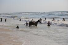 صيف غزة المزعج...مشاهد بيئية ضارة تذر المزيد من الرماد على ...