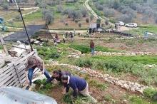 من قلب مزرعة عضوية في رام الله...نشطاء فلسطينيون يطلقون يوم ...