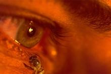 نحل يتغذى على دموع الإنسان وعرقه بدلًا من الرحيق!
