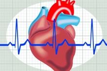 من بينها الفوز باليانصيب...أدلة تؤكد تأثير المخ على القلب