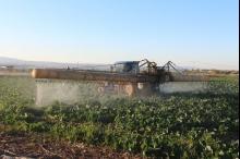 الاستخدام المفرط لمبيدات الأعشاب... مزارعون منقسمون ورقابة غائبة