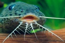 علماء يكشفون تشكل زخارف جلود الحيوانات