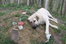 كلب يزور صاحبه المتوفَّى كل يوم منذ عام.. يضع رأسه ...