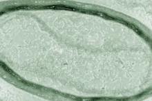 هذه الفيروسات الضخمة بشكل لا يصدق تتحدى البيولوجيا وتخلق جيناتها ...