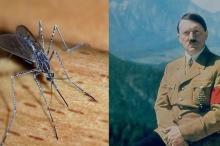 بالصور ..كيف حاول هتلر استخدام البعوض لهزيمة الحلفاء؟