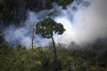 """الأمازون """"رئة العالم"""".. حرائق تلتهمها ومدن تغرق بالظلام"""