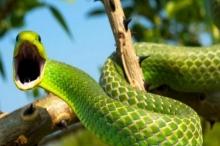 قوة الثعابين الفائقة التي تحير العقول
