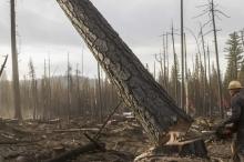 ماذا سيحدث إذا تم قطع جميع الأشجار في العالم؟