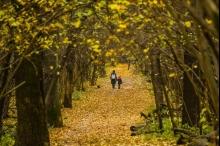 بالصور: روعة الخريف في أوروبا