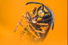 هل سبق لك أن تمنّيت الهلاك الكاسح للحشرات حولنا؟؟ ...