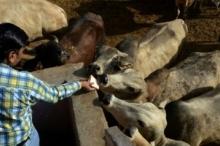 اشتبهوا أن بحوزته لحم أبقار فقتلوه.. هذا ما فعله حشدٌ ...
