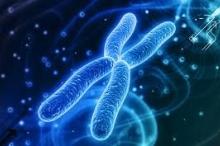 لماذا يحتاج الذكور إلى الكروموسوم X؟