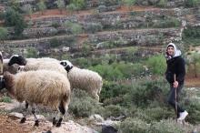 اجد النوباني...ما عرفناه عن طبيعة فلسطين لا يُذكر أمام ما ...