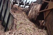 فيديو| تعرف على الجزيرة التي استبدلت قصب السكر بالنفط