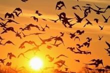 دلالة على قرب فصل الخريف - بدء موسم هجرة الطيور ...