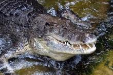 """ظنوا أن تمساحا قتله.. فاكتشفوا """"السبب الصادم"""""""