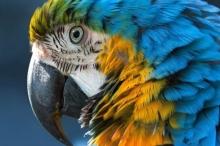 لماذا يكون اللون الأزرق نادراً في الطبيعة؟