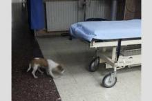 بالفيديو: تطورات جديدة في قضية الكلب.. ما الذي حدث فجر ...