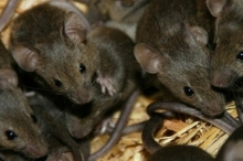 ممنوع صيد الفئران.. تعرف على أغرب 12 قانون فى العالم