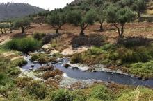مجاري الأحياء الراقية في رام الله تلوث البيئة والمياه في ...