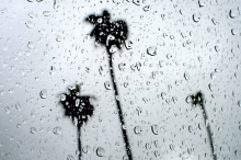 كميات الأمطار الهاطلة حتى صبيحة اليوم الإثنين 17/02/2020
