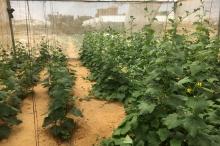 عبر تقنية مغنطة المياه.. مزارعو غزة يتحدّون ملوحة المياه