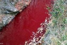 """نهر يتحول إلى الأحمر القاني.. والسبب """"دماء الخنازير"""""""