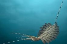 بالفيديو.. أدمغة مجمدة لوحوش بحرية مرعبة عمرها نصف مليار سنة ...
