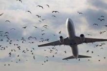 طيور تهدد طائرات لبنان.. وخوف من كارثة قادمة!