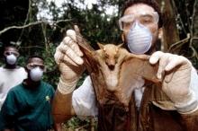فيضان من الفيروسات يهددنا.. قصة الغابات الغامضة التي يحتمل أن ...