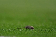 """حملة """"عسكرية"""" من أجل فئران"""