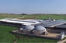 مصنع الجبريني للألبان ينتج الكهرباء من روث الأبقار ويزود بلدة ...