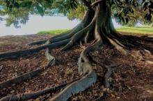 """كيف كشفت """"شجرة تين"""" موقع تركي قتل قبل عقود؟"""