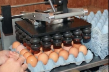 """البيضة اللقيطة ...متى سيتم تفعيل وسم البيض الفلسطيني """"ختم الصلاحية"""" ..."""