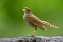 لماذا يعد صوت العصافير أفضل ترياق لنا لعلاج القلق المحيط ...