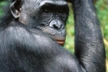 القردة والسعادين فصيلتان مختلفتان، هكذا يمكنك التفريق بينهما