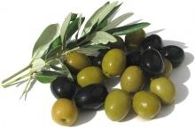 هل هناك أشجار خاصة بـ الزيتون الأخضر وأخرى للزيتون الأسود؟