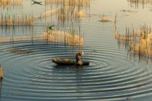 بالصور| المناطق الريفية البكر والمناظر الطبيعية الخلابة في فيتنام