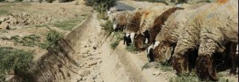 الجفاف في فلسطين وسائر بلاد الشام يعتبر الأشد منذ نحو تسعة قرون وملايي ...