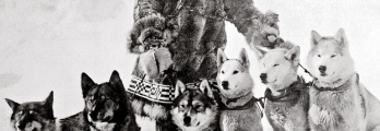 سباق الرحمة.. يوم أنقذ متزلجون وكلاب الأطفال من مرض قاتل