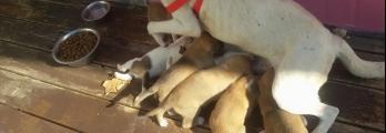 مأوى مهدد بالإزالة في بيت ساحور يفتح الباب واسعاً أمام مصير الكلاب الض ...