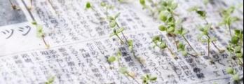 بالفيديو: صحيفة خضراء بدلا من رميها.. إزرعها لتنبت لك الأزهار