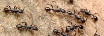هل تعلم ماذا يحدث للنمل عندما يموت
