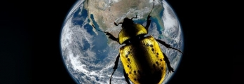 من الذي يزن أكثر، البشر أم الحشرات؟