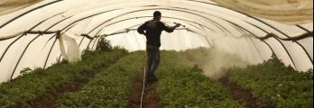 لماذا يتفاقم تآكل وتدهور الأراضي الزراعية الفلسطينية؟ هل من حلول فعالة ...