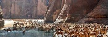 سبعة محميات تخبرك عن طبيعة مصر الخلابة